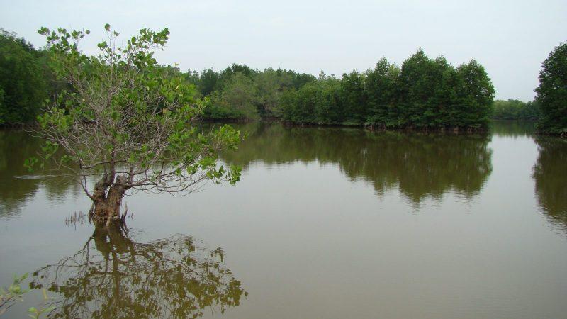Bán thửa đất lớn tại xã Lý Nhơn-An Thới Đông, huyện Cần Giờ tiện làm du lịch sinh thái, Dt từ 13ha đến 29ha