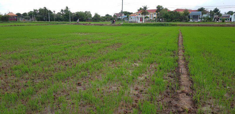 Bán lô đất lúa xã Thuận Thành, huyện Cần Giuộc, Long An, Dt 1027m2, mt đường xe hơi gần QL50